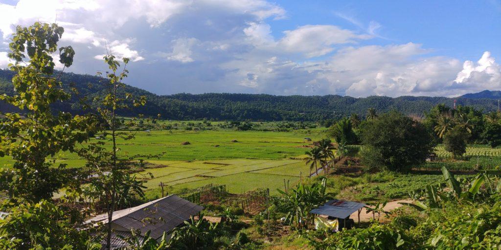 Mae Hong Son Loop Rice Fields