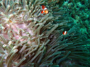 Scuba Diving in Phuket, Thailand – With The Junk