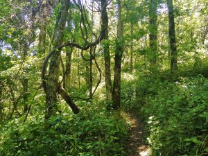 Appalachian Trail: Day 11 – Mile 70.2 to 73.7