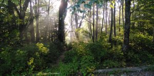 Appalachian Trail: Day 18 – Mile 131 to 136.9