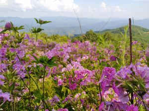Appalachian Trail: Day 20 – Mile 149 to 159.2