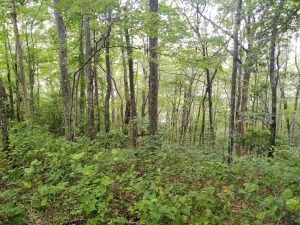 Appalachian Trail: Day 21 – Mile 159.2 to 165.9