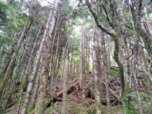 Appalachian Trail: Day 28 – Mile 218.2 to 233