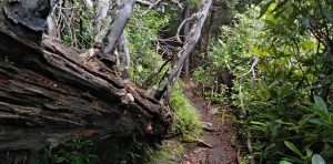 Appalachian Trail: Day 29 – Mile 233 to 239