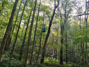 Appalachian Trail: Day 44 – Mile 345.2