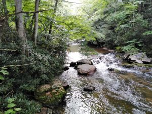 Appalachian Trail: Day 56 – Mile 481 to 499