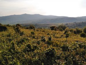 Appalachian Trail: Day 57 – Mile 499 to 510.9