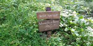 Appalachian Trail: Day 65, 66 & 67 – Mile 617.8 to 625.4