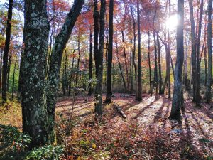 Appalachian Trail: Day 105 – Mile 1087.5 to 1102.3
