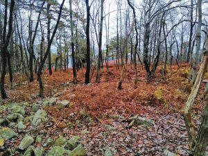 Appalachian Trail: Day 120 – Mile 1247.3 to 1259.2